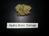 Hydro Brain Damage Og