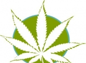 MarijuanaOnlineStore.Com of Beverly Hills