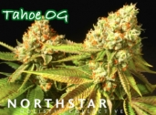 Northstar Holistic Collective, Sacramento, CA