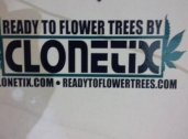 Clonetix - Washington's ONLY Provider of ReadyToFlowerTrees