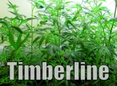 Timberline Herbal Clinic and Wellness Center, Denver, CO