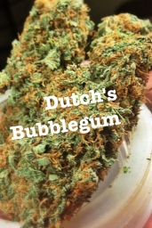 Dutch's Bubblegum
