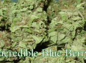 Incredible Blue Berry