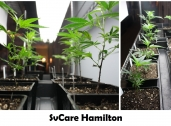 SVCare Collective-Hamilton