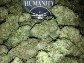 HUMANITY/MedEx