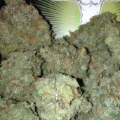 BLUE DREAM NATIONAL HIGH TIMES CUP WINNER