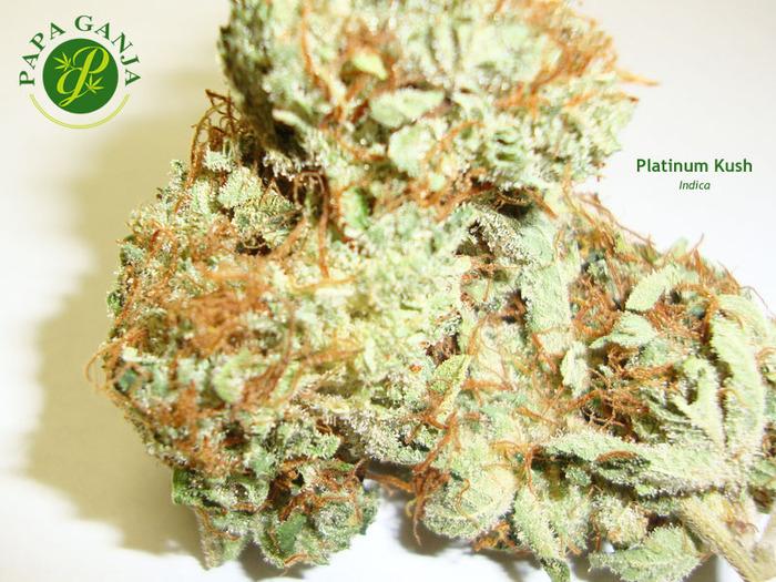platinum-kush-weed-6