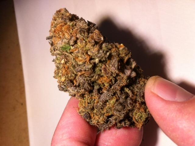 mango-kush-weed-2