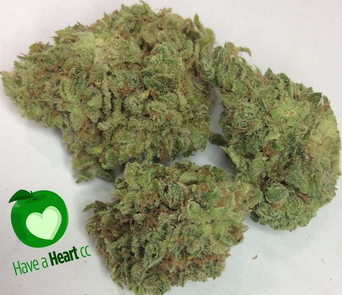 chocolope-weed-5