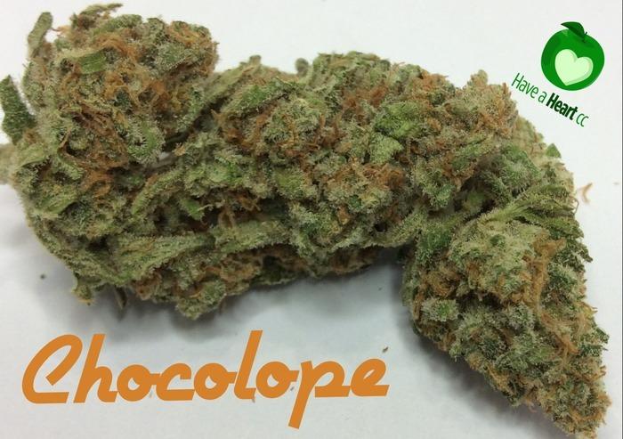 chocolope-weed-3