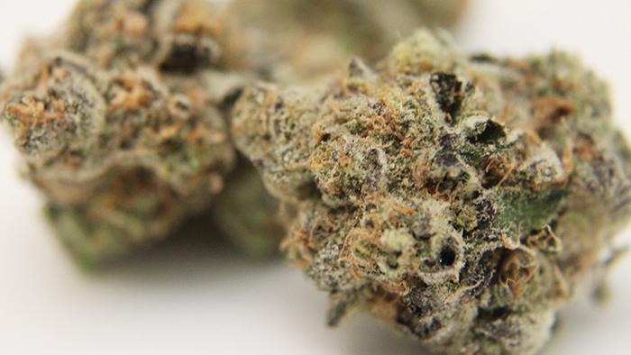 girl scout cookies hybrid nugs marijuana blog thc