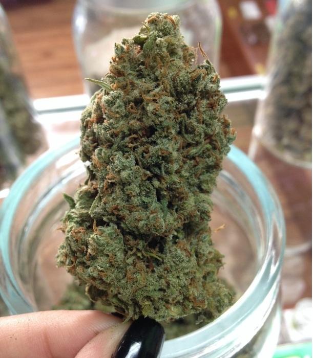 jack-herer-sativa-weed