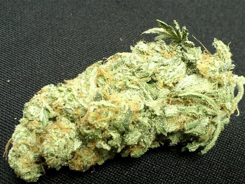 blueberry-hybrid-weed-3