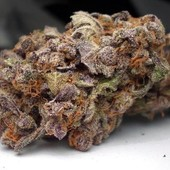 PURPLE TRAINWRECK