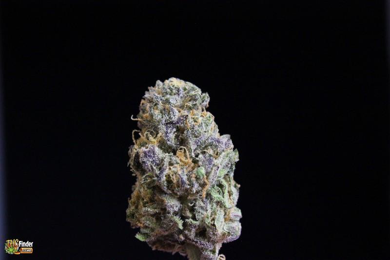 purple-zombie-indica-4