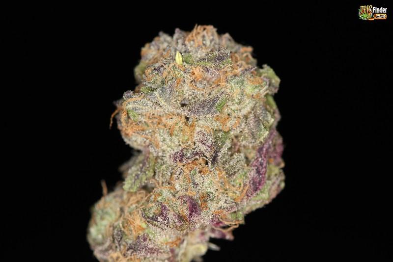 purple-zombie-indica-2