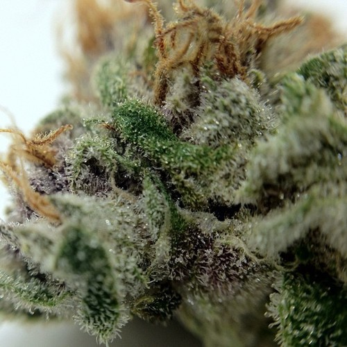bubba-kush-weed-4