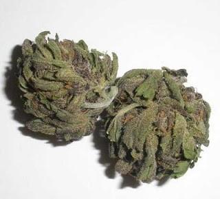 black-widow-weed-3
