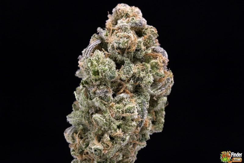 abominable snowman nugs marijuana blog thc finder
