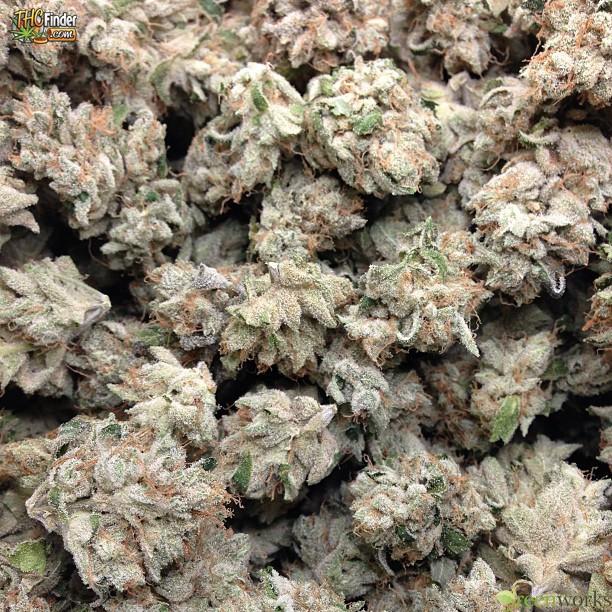 xxx-og-weed