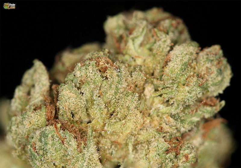 dr-death-cannabis