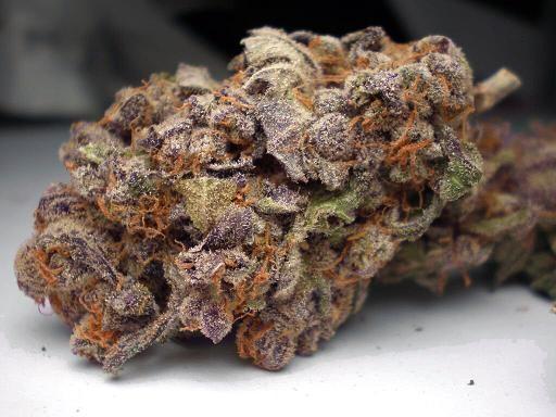 purple-trainwreck-hybrid-1