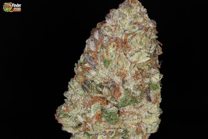 purple-trainwreck-weed-2