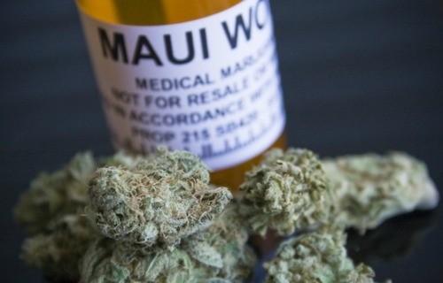 maui-wowie-weed-6