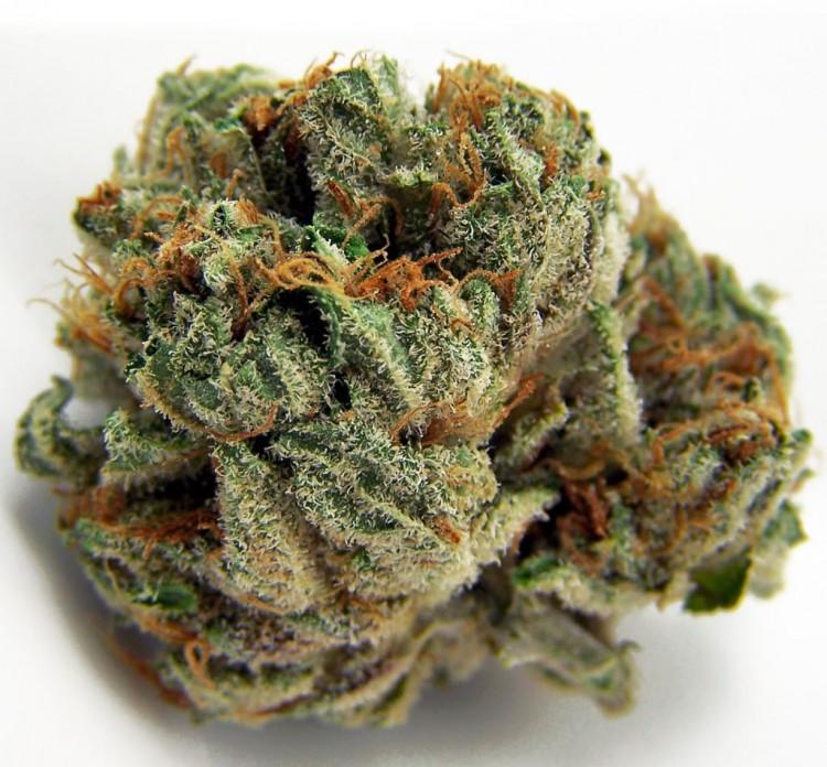 chocolate-chunk-weed-3