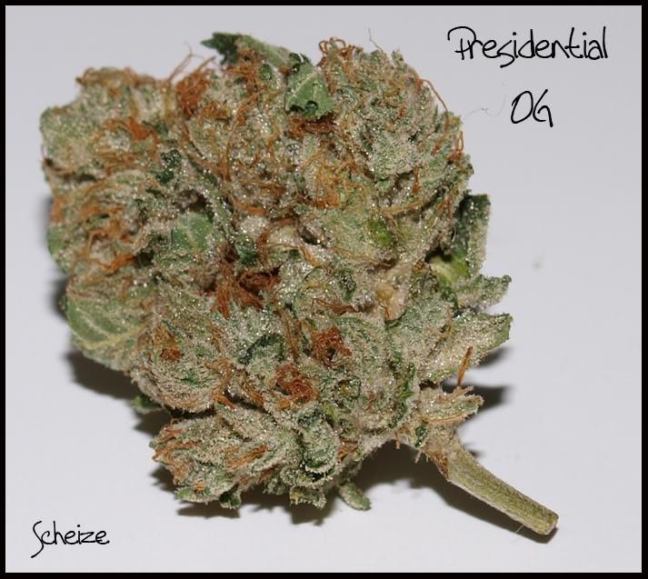 presidential-og-hybrid-weed