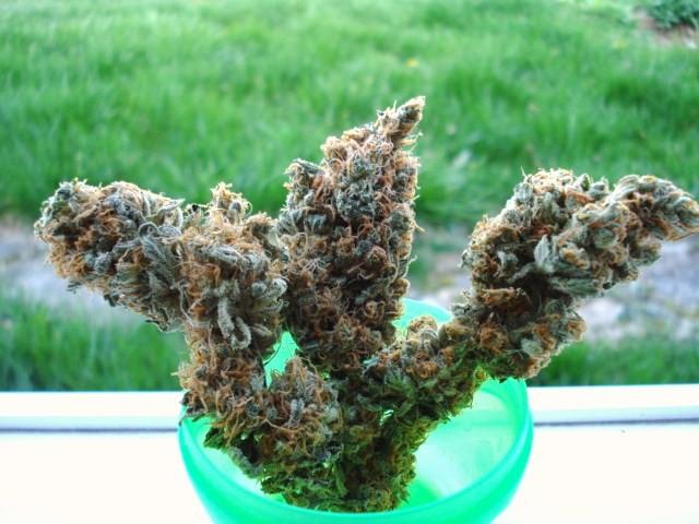 space-queen-weed-3