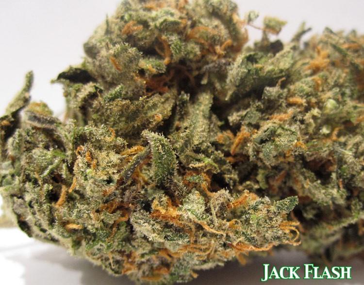 jack-flash-weed-3