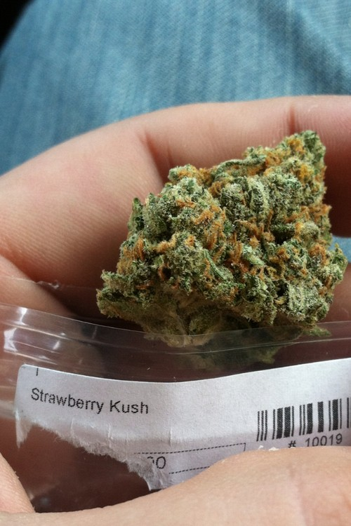 strawberry-kush-2