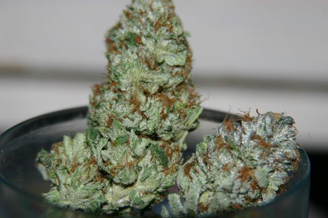 king-kush-weed-2