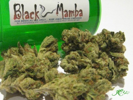 black-mamba-hybrid-weed-4