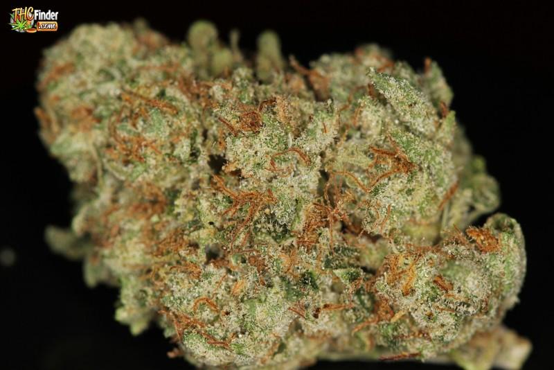 jupiter-og-weed-4