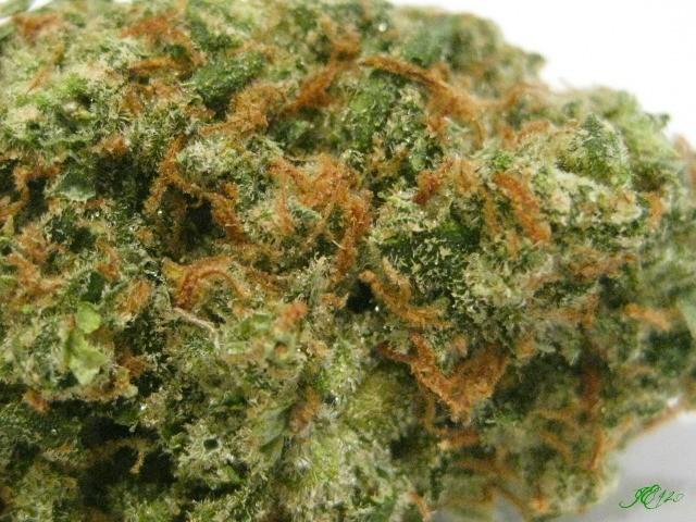 platinum-jack-weed-3