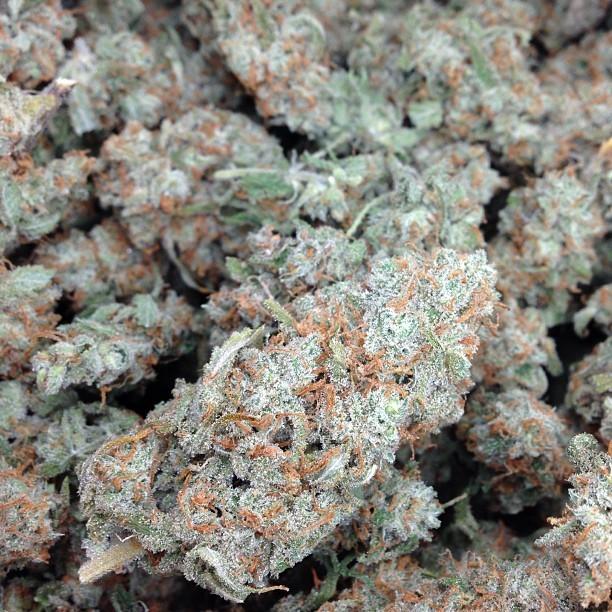 j1-weed-2