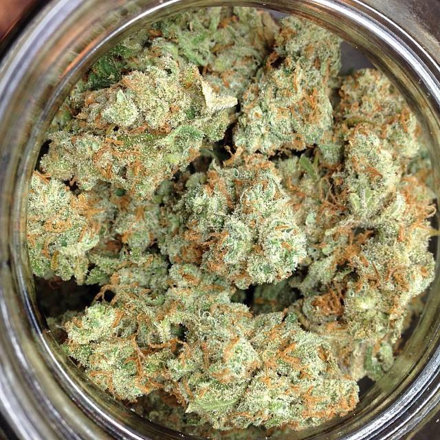 j1-weed-1