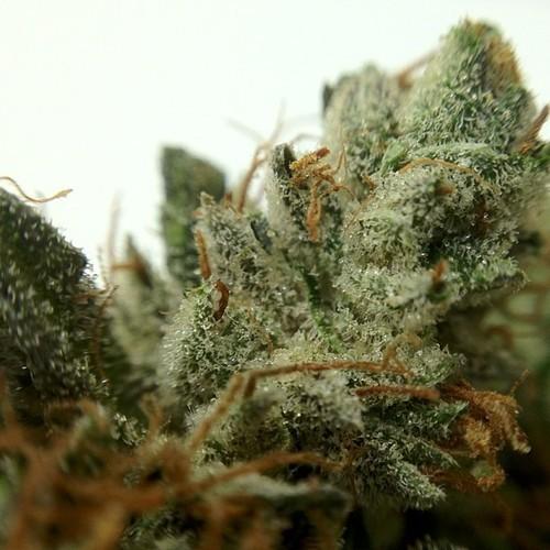 bubba-og-weed-2