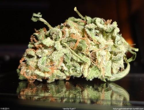 vanilla-kush-weed-4