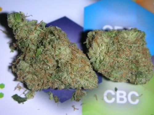 vanilla-kush-weed-2