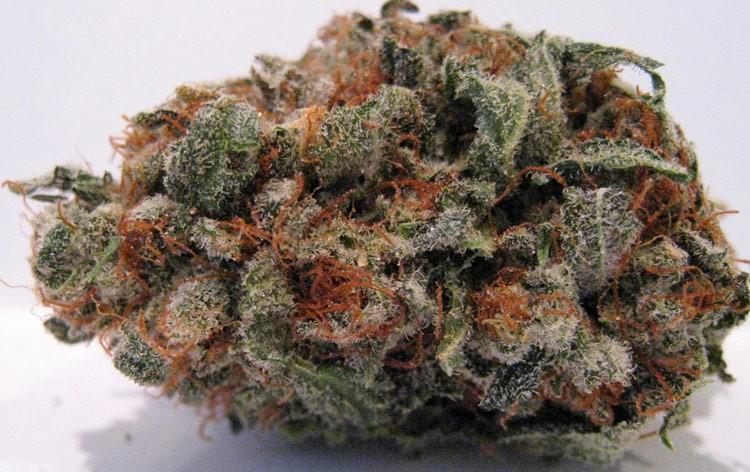 fruity-pebbles-hybrid-weed-4