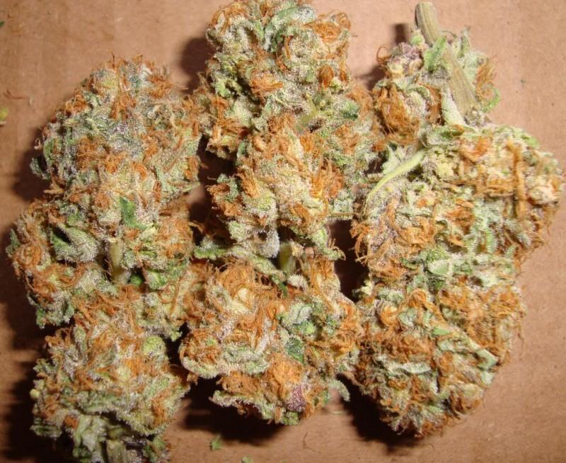 querkle-weed-2
