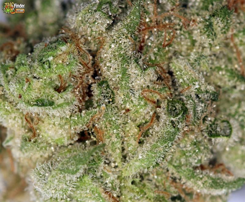 banana-kush-weed-2