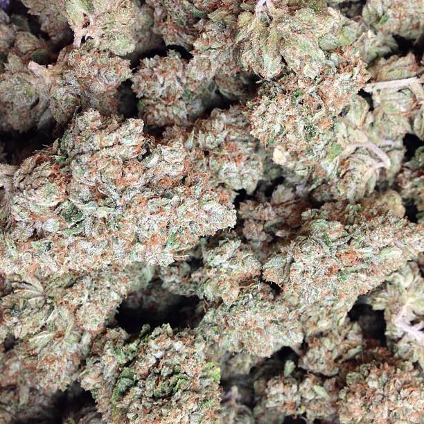 larry-og-weed-5