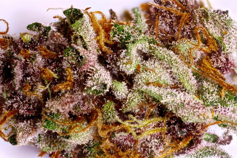 purple-dragon-weed-5