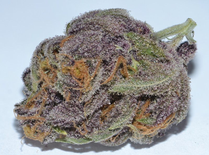 purple-dragon-weed-1