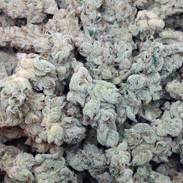 holygrailog-1-weed