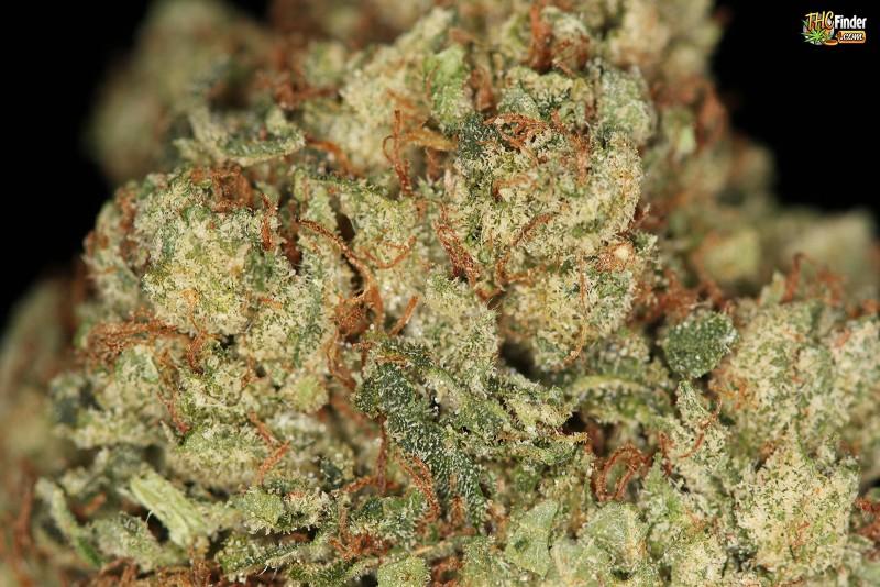 true-og-weed-4